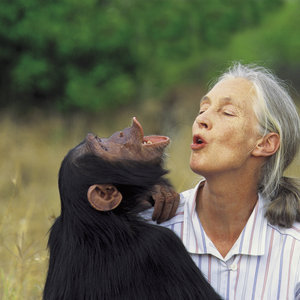 DEVASTATING THE EARTH and ANIMALS: THE FUTILITY OF WAR--by Jane Goodall | Depth Psych | Scoop.it