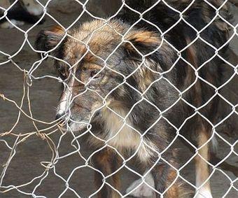 Tiere brauchen einen Schutzengel | Social Mercor | Scoop.it