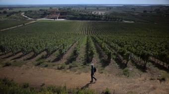 La route des vins : une série de reportages télévisés sur l ... | Tourisme du vin | Scoop.it