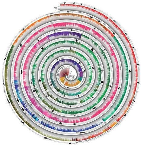 World's Largest Tree Of Life Visualizes 50,000 Species Over Time | visual data | Scoop.it