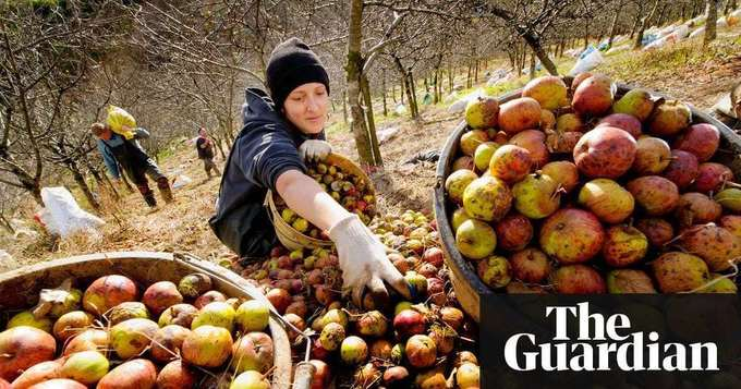 Farmers tell Gove: lack of migrant workers now 'mission critical'   Politics   The Guardian