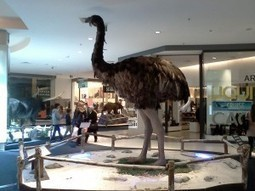 A moa walks into a mall | Sci-Ed | Science & Mass Media | Scoop.it