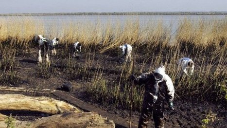 Total condamné à verser 80.000 euros à la LPO après une pollution de la Loire en 2008 | Zones humides - Ramsar - Océans | Scoop.it