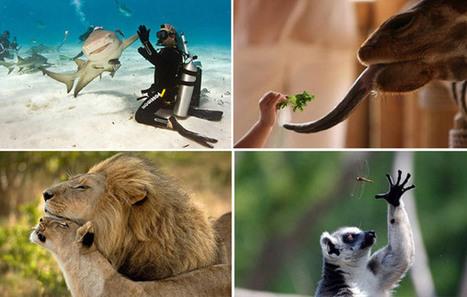 15 fotos de animais nas quais o fotógrafo estava no lugar certo e na hora certa | Cultural News, Trends & Opinions | Scoop.it
