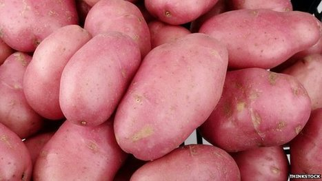 New GM potatoes can resist blight | Erba Volant - Applied Plant Science | Scoop.it