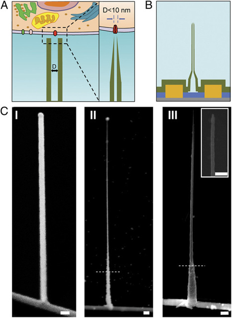 Two technologies finally meet: Nanowires and nanotubes were combined to form intracellular bioelectronic probes | Amazing Science | Scoop.it