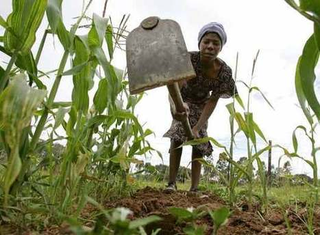 ¿Quiénes están detrás del acaparamiento de tierras en el mundo? | desdeelpasillo | Scoop.it