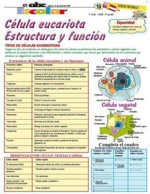 Célula Eucariota Estructura Y Funci Oacu