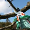 Steve's Tree Service