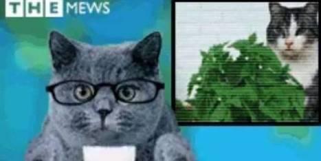 Mais pourquoi le choix des chats dans ce climat anxiogène ? | CaniCatNews-actualité | Scoop.it