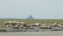 La Baie du Mont Saint Michel : Le mouton de pré-salé | Voyages et Gastronomie depuis la Bretagne vers d'autres terroirs | Scoop.it