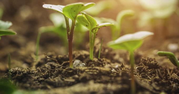 Agriculture biologique : La Tunisie sera parmi les pays pionniers dans le domaine - Al HuffPost Maghreb
