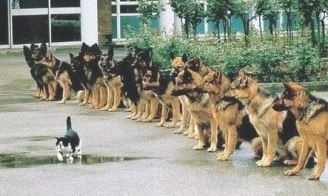 Por qué ladisciplina esmucho más importante que lamotivación | Recursos Humanos 2.0 | Scoop.it