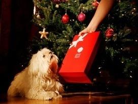 Les box pour chiens et chats défient la crise | CaniCatNews-actualité | Scoop.it