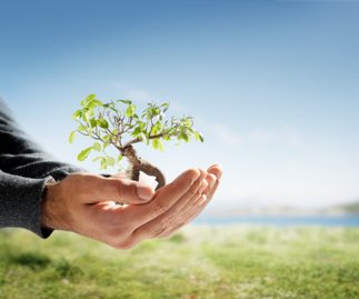 Plant a Tree for Arbor Day! - Project: Greenify | Guide to Going Green in Your Home, Office & Life | 100 Acre Wood | Scoop.it