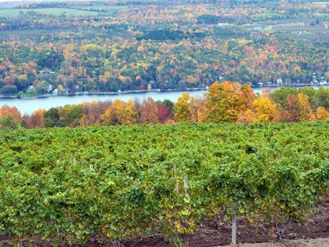 8 overrated wine countries around the world — and where to go instead | Charliban Lebnen | Scoop.it