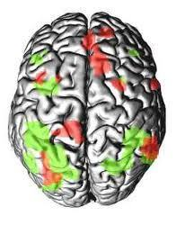 Conscience et cerveau ...écoutez la conférence | Fonctionnement du cerveau & états de conscience avancés | Scoop.it