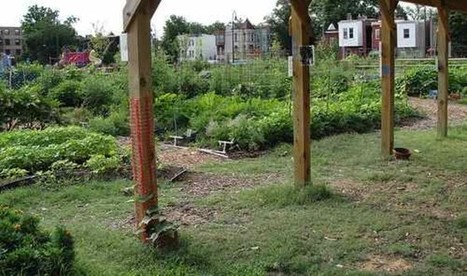 Capital City Farming: 10 Urban Agriculture Projects in Washington, DC | Local Food Systems | Scoop.it