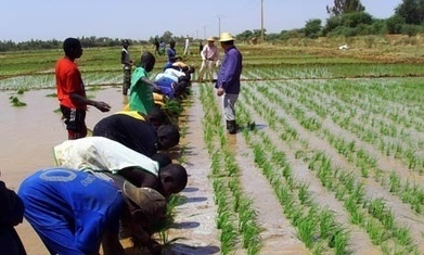 Chinese food security may be motivating investments in Africa | Food & Nutrition Security in East Africa | Scoop.it