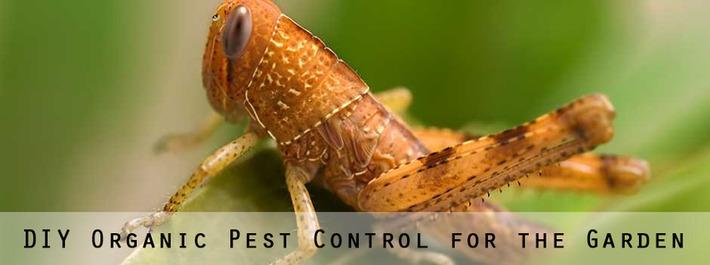 Garden Pest Control [Infographic] | 24/7 Pest Control | Container Gardening | Scoop.it