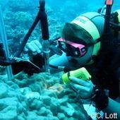 Une réaction en chaîne se révèle mortelle pour les coraux | Toxique, soyons vigilant ! | Scoop.it