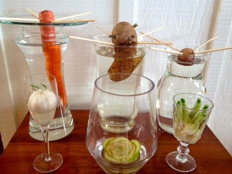13 Vegetables That Magically Regrow Themselves | FoodieDoc says: | Scoop.it