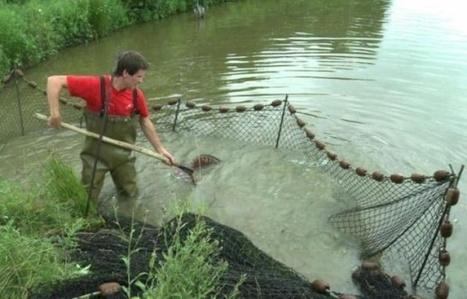 Les poissons d'eau douce également contaminés par les microplastiques | Toxique, soyons vigilant ! | Scoop.it