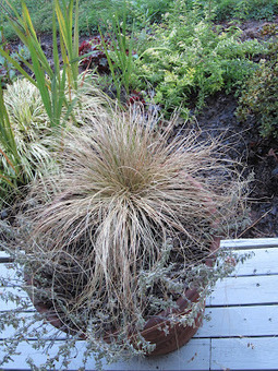 Goodnight!: Are you watering? …correctly?   Container Gardening   Scoop.it