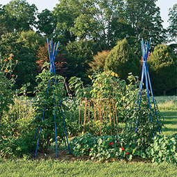 5 Great Ideas for a Beautiful Vegetable Garden: Organic Gardening | 100 Acre Wood | Scoop.it