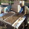 Ecolodge La Belle Verte, gîte et chambres d'hôtes en Bretagne