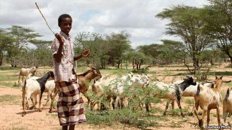 Northern Kenya's Drought-hit Herders Pin Hopes on Desert Farming | Gender & Protection in East Africa | Scoop.it