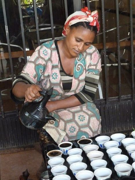 Saving coffee from extinction - BBC News | Upsetment | Scoop.it