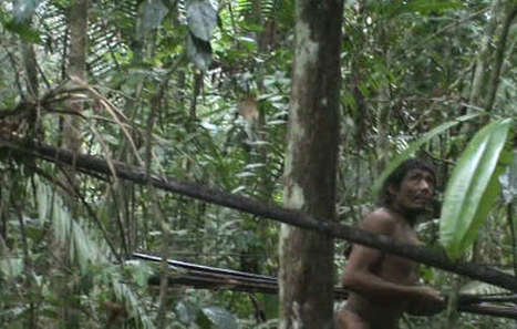 """Brazil:  """"Wave after wave"""" of loggers invade uncontacted tribe's rainforest 