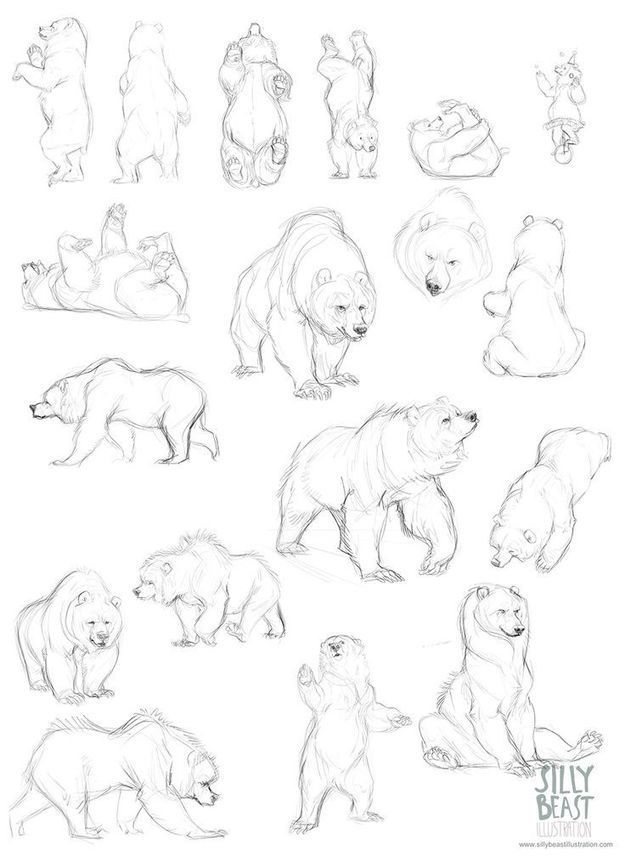 Bear Drawing Reference Guide Drawing Referenc