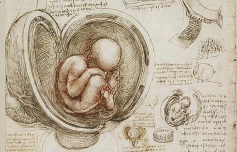 Download the Sublime Anatomy Drawings of Leonardo da Vinci | Univers(al)ités | Scoop.it