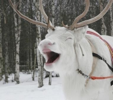 Institut finlandais - Jeu-concours : Trouvez un nouveau nom pour l'Institut finlandais et gagnez un voyage pour deux en Laponie | Voyages en terres polaires | Scoop.it