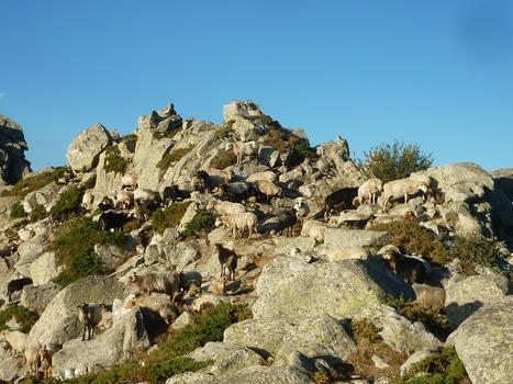 "Un courant d'air frais nchy: Buena vista corsica - my ""GR20"" around Corsica | Contemporary fiction | Scoop.it"