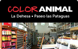 HOME - Color Animal | Chilean Art History and Culture | Scoop.it