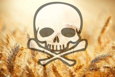 A New Reason Why Wheat And GMOs Can Destroy Your Health | TheSleuthJournal | Monsanto vs Mother Earth | Scoop.it