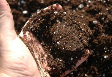 Desafíos de la agricultura espacial (y III).   Horticultura Efectiva   Cultivos Hidropónicos   Scoop.it