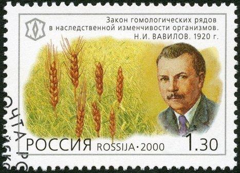 Ces semences rares et anciennes étaient conservées en Russie. Elles ont été plantées en France ! | Des 4 coins du monde | Scoop.it