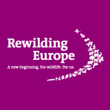 BirdLife and EBCC join wildlife comeback study » Rewilding Europe | Life on Earth | Scoop.it