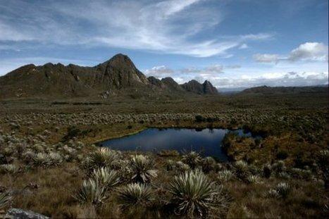 Corte Constitucional prohíbe la minería en páramos del país   Actualidad colombiana   Scoop.it