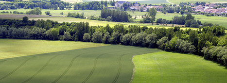 Quand les pratiques agricoles sont au service de la biodiversité | AGRONOMIE VEGETAL | Scoop.it