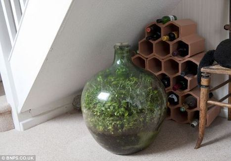 This Garden In A Bottle Has Been Thriving Since 1960: Sealed in its own ecosystem and watered just once in 53 years | Vintage Living Today For A Future Tomorrow | Scoop.it