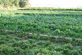 Should You Buy Organic?   NYL - News YOU Like   Scoop.it