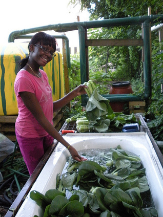 Gardening, Farming Take Root in New York City - USDA.gov (press release) (blog) | Green Gnome Garden News | Scoop.it