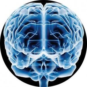 Una pequeña revolución en la neurociencia | Educacion en la era Digital | Scoop.it