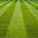 How to lay  a  lawn. | Gardening | Scoop.it