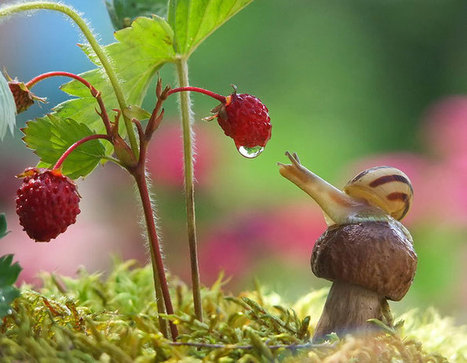A Magical Miniature World Of Snails By Vyacheslav Mishchenko | Semiotic Adventures with Genetic Algorithms | Scoop.it